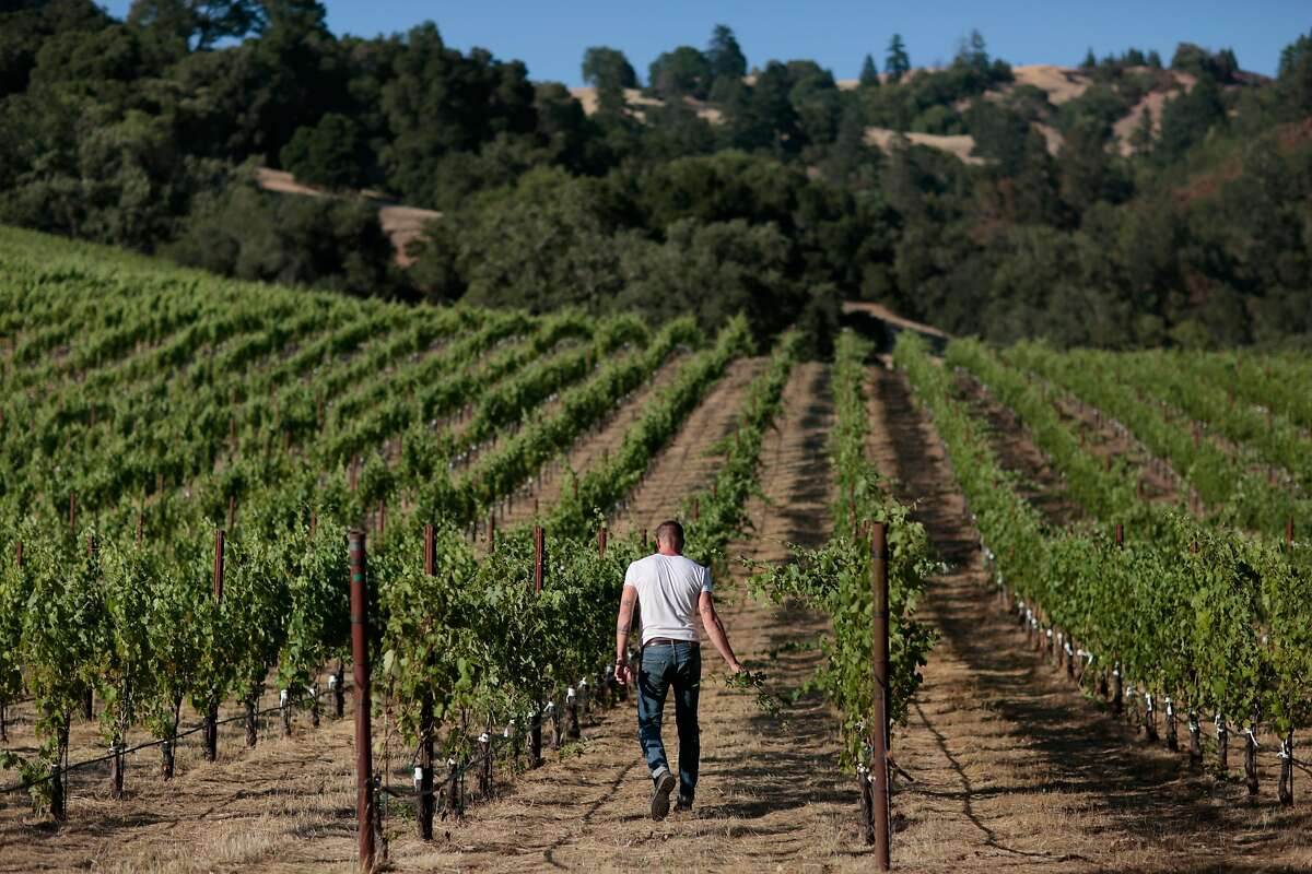 Winemaker Sam Bilbro of Idlewild Wines walks through the Arneis vineyard of Lost Hills Ranch in Yorkville, California, Thursday, June 25, 2020. Ramin Rahimian/Special to The Chronicle � Winemakers Sam Bilbro (Idlewild Wines), Evan Lewandowski (Ruth Lewandowski Wines), and Mike Lucia (Rootdown Wines) pose for a portrait in the vineyard of Lost Hills Ranch in Yorkville, California, Thursday, June 25, 2020. The three winemakers are working with Alpine grape varieties (grapes from or near the European Alps) such as Nebbiolo, Trousseau, and Arneis grown in vineyards in Mendocino County
