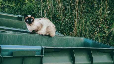 With more clinics closed to help slow the spread of the coronavirus pandemic, fewer feral cats will be neutered this year.