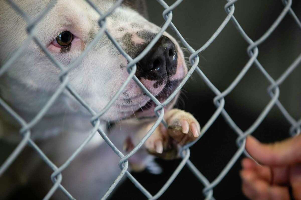Animal Care Services is looking to find homes or the owners for hundreds of animals it rescued during last week's severe winter weather. The file photo is of a dog that was housed at the city shelter.