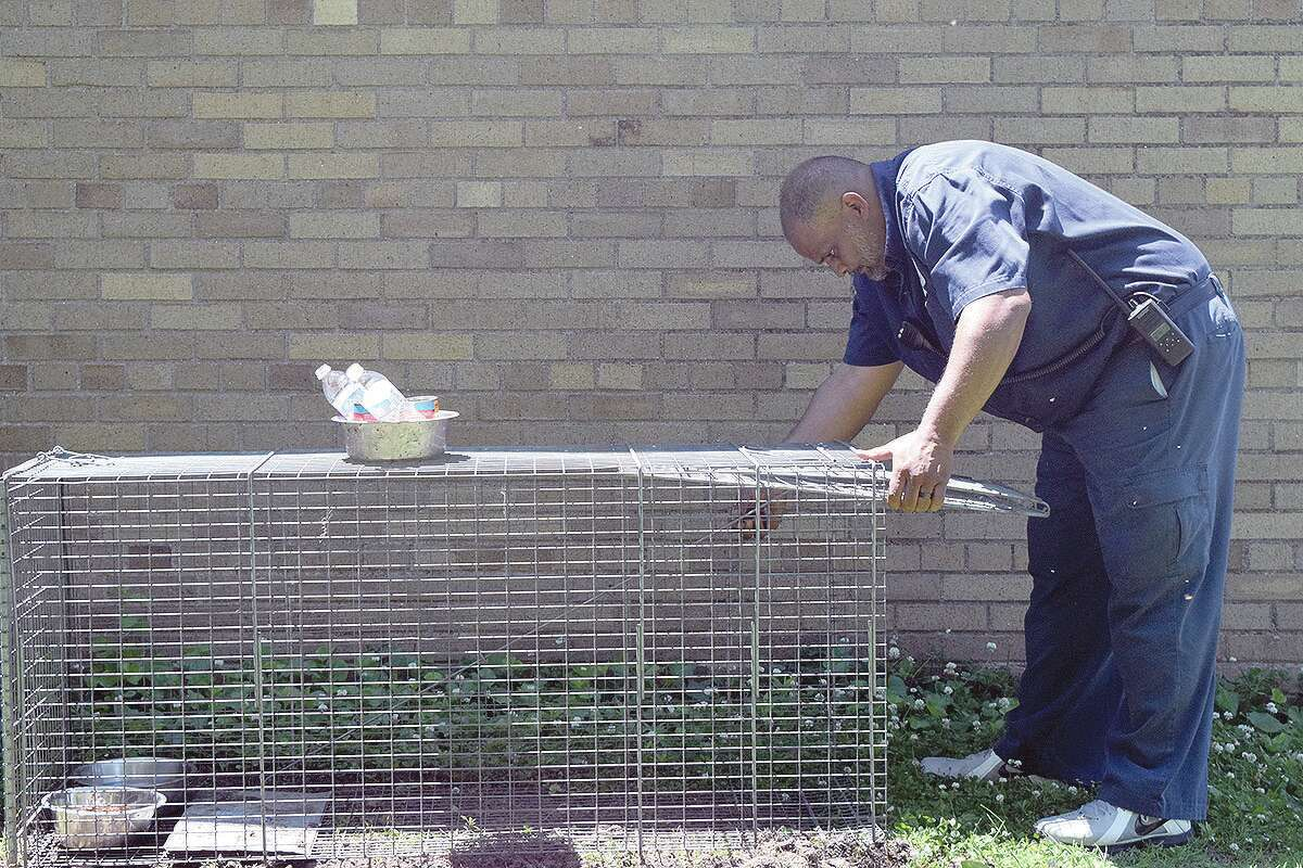Animal control officer L.C. Clinton sets up a bait for a loose animal.