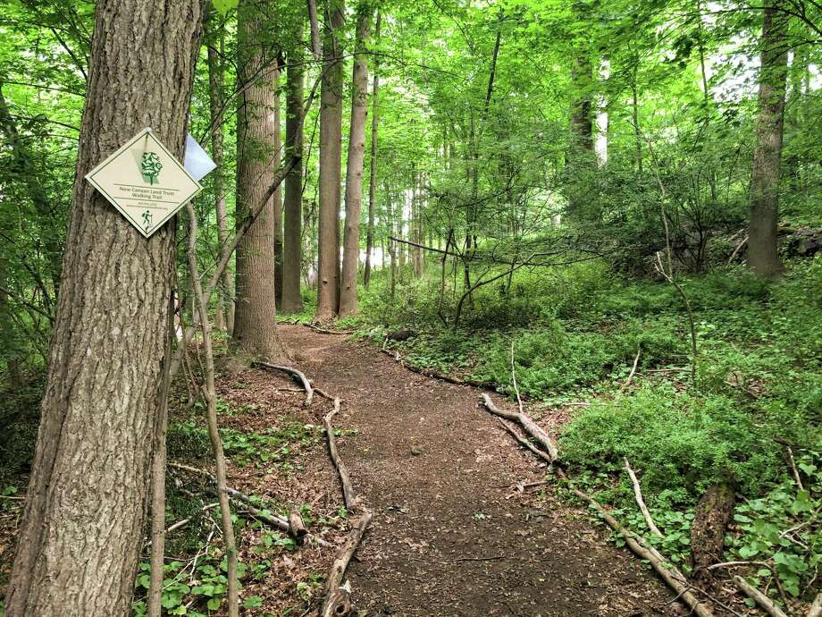 The New Canaan Land Trust announced the opening of their newest GreenLink trail on Oenoke Lane. Photo: New Canaan Land Trust