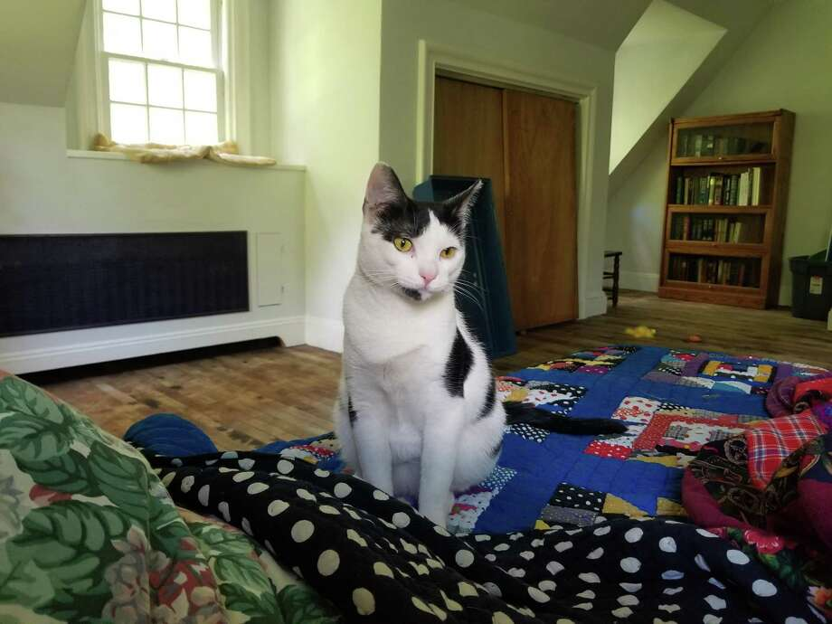 Puzzles the cat is searching for a forever home. Photo: ROAR / Contributed Photo