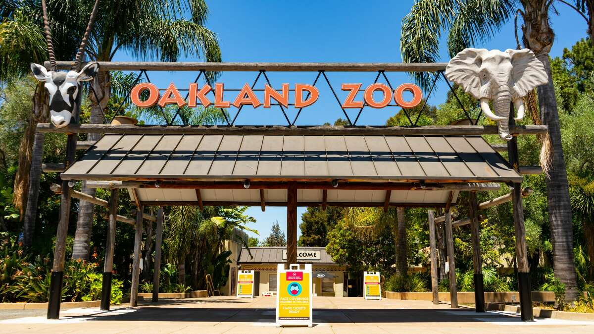 The Oakland Zoo could close for good if it isn't permitted to reopen this month, according to Dr. Joel Parrott, the zoo's president and CEO.