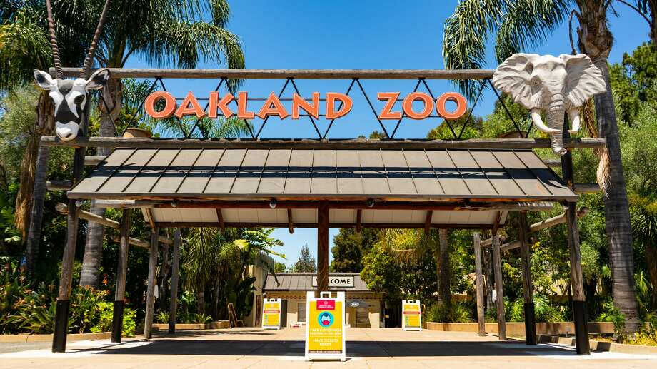 The Oakland Zoo could close for good if it isn't permitted to reopen this month, according to Dr. Joel Parrott, the zoo's president and CEO. Photo: Reuben Maness/Courtesy Of The Oakland Zoo