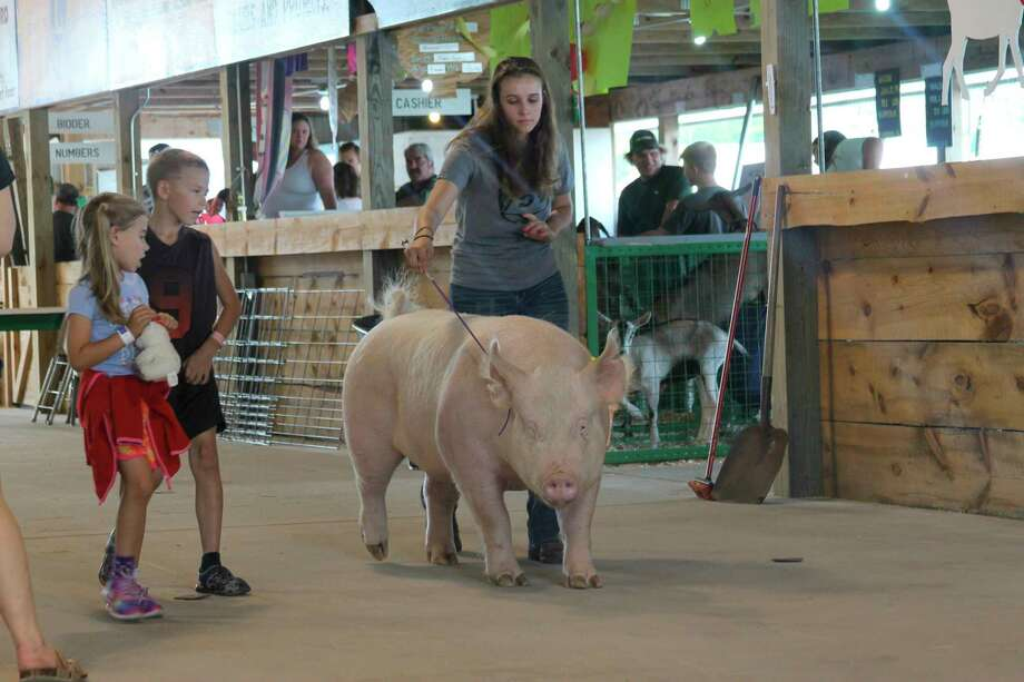 Participants in this year's 4-H animal auction and competition will turn to a new online program offered by the Michigan State University Extension, in lieu of an in-person event. (File Photo)