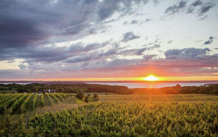 The sun sets on a vineyard on Old Mission Peninsula in Traverse City. (Katy Kildee/kkildee@mdn.net) Photo: (Katy Kildee/kkildee@mdn.net)