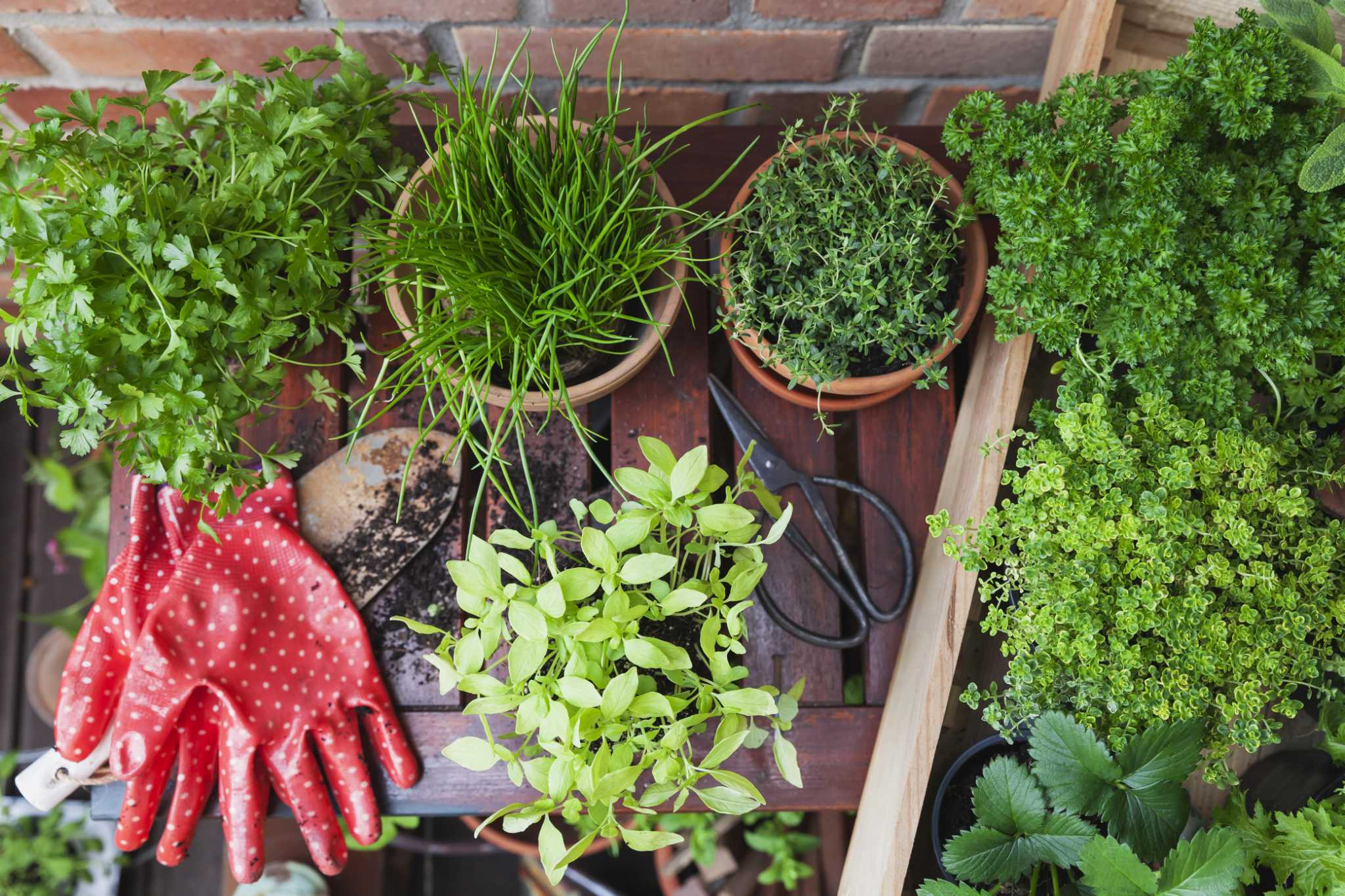 Paul's Cooking Tips: How to harvest your herb garden