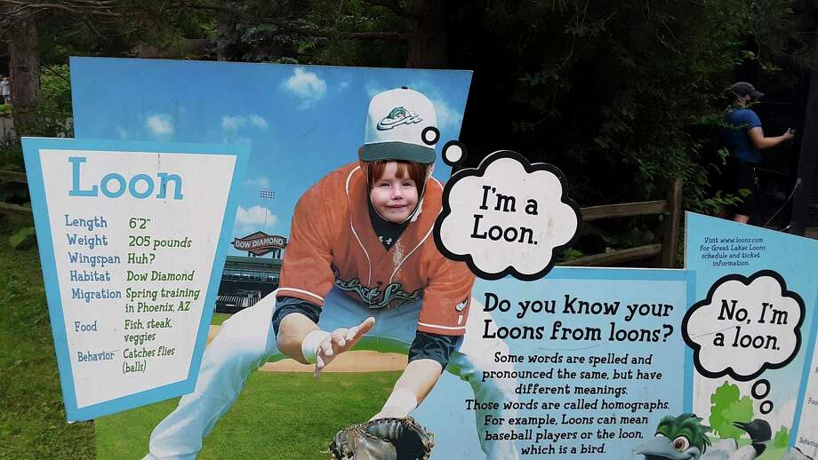 Meredith Chalk sticks her face through an opening in a cardboard cutout at the Great Lakes Loons/loon display at the Saginaw Children's Zoo. (Dan Chalk/chalk@mdn.net)