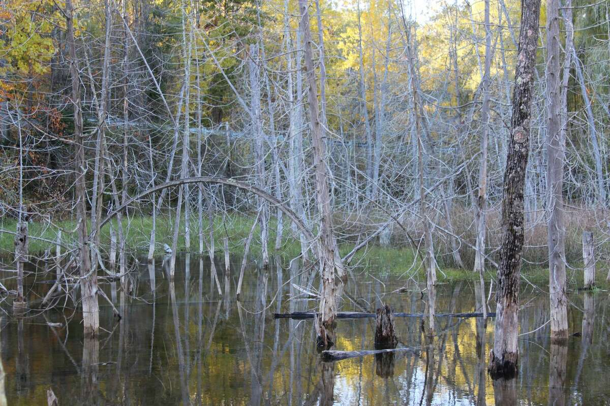Along the portion of the Betise Valley Trail from Frankfort to Elberta, just past the Adams Road parking lot, several large ponds can be found.