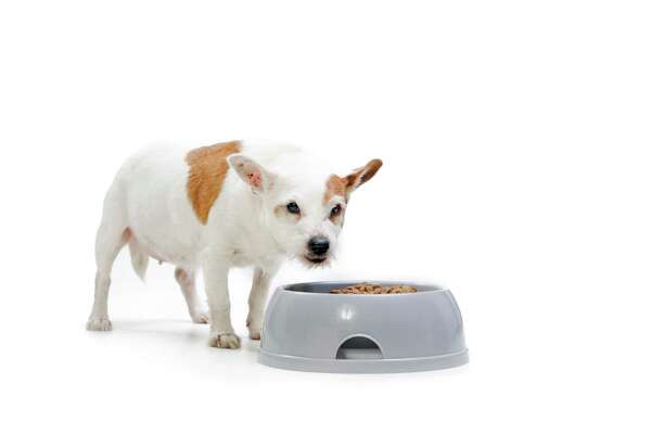 Food aggression can cause serious fights between dogs.