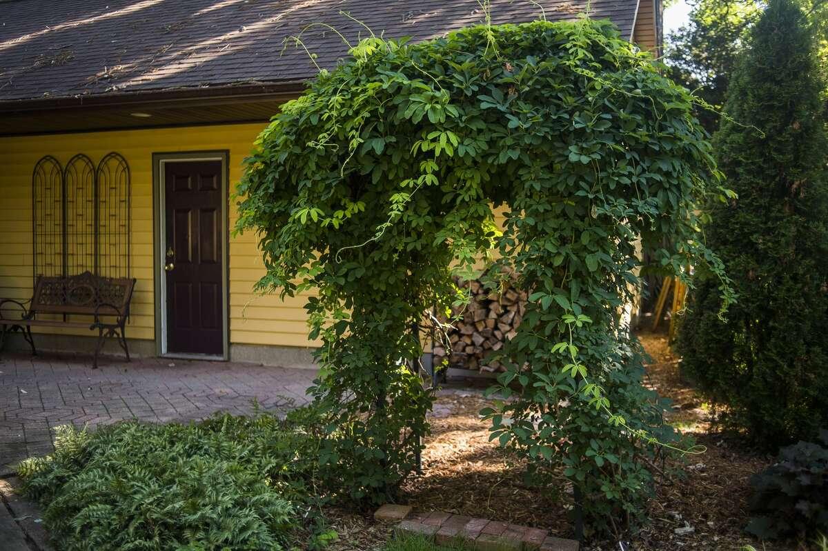 The O'Neil garden at 803 W. Ellsworth Street will be included in the annual Garden Walk on Tuesday, July 14, 2020. (Katy Kildee/kkildee@mdn.net)