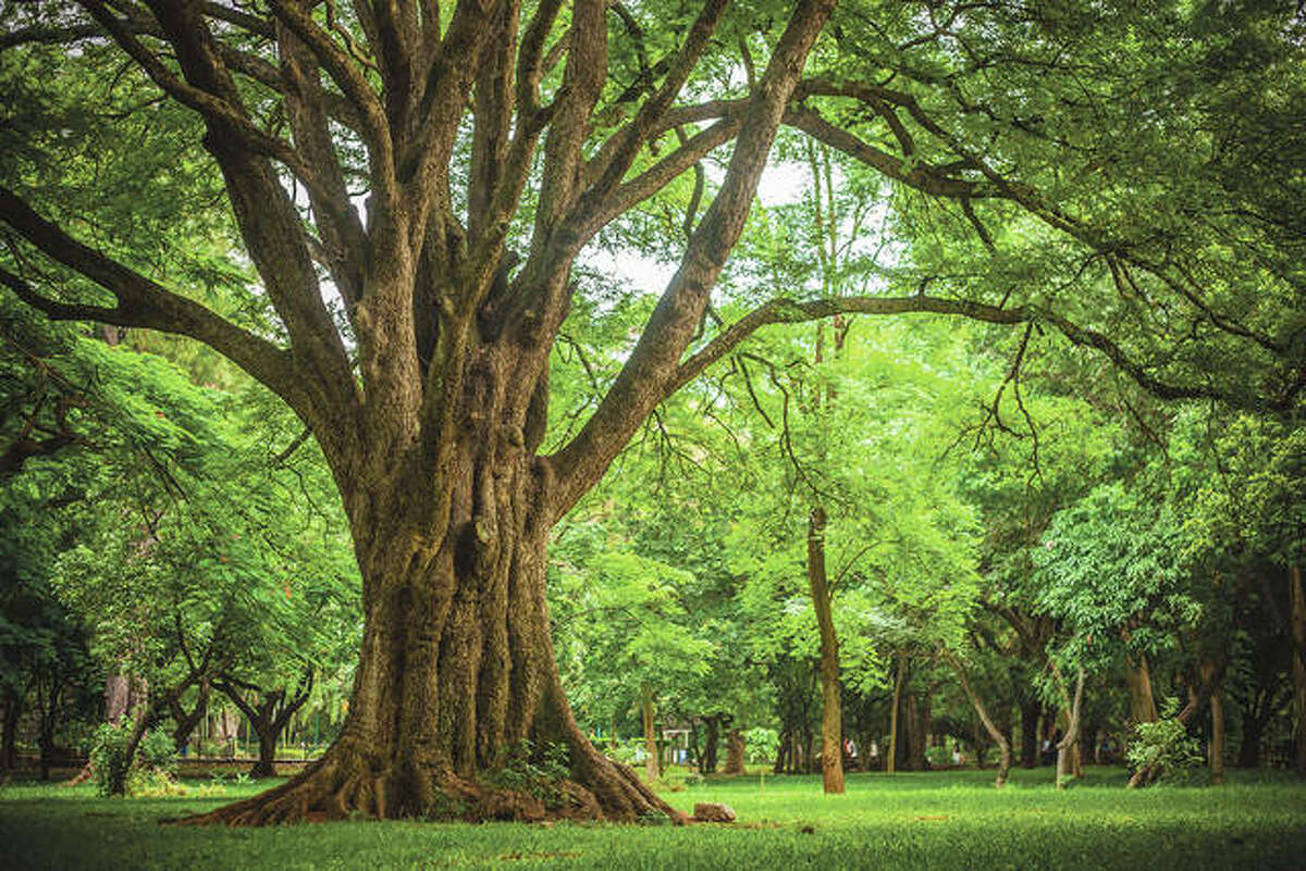 An important thing to note for trees is that roots are adapted to being buried in the soil, but the root flare and trunk must be above the soil line.