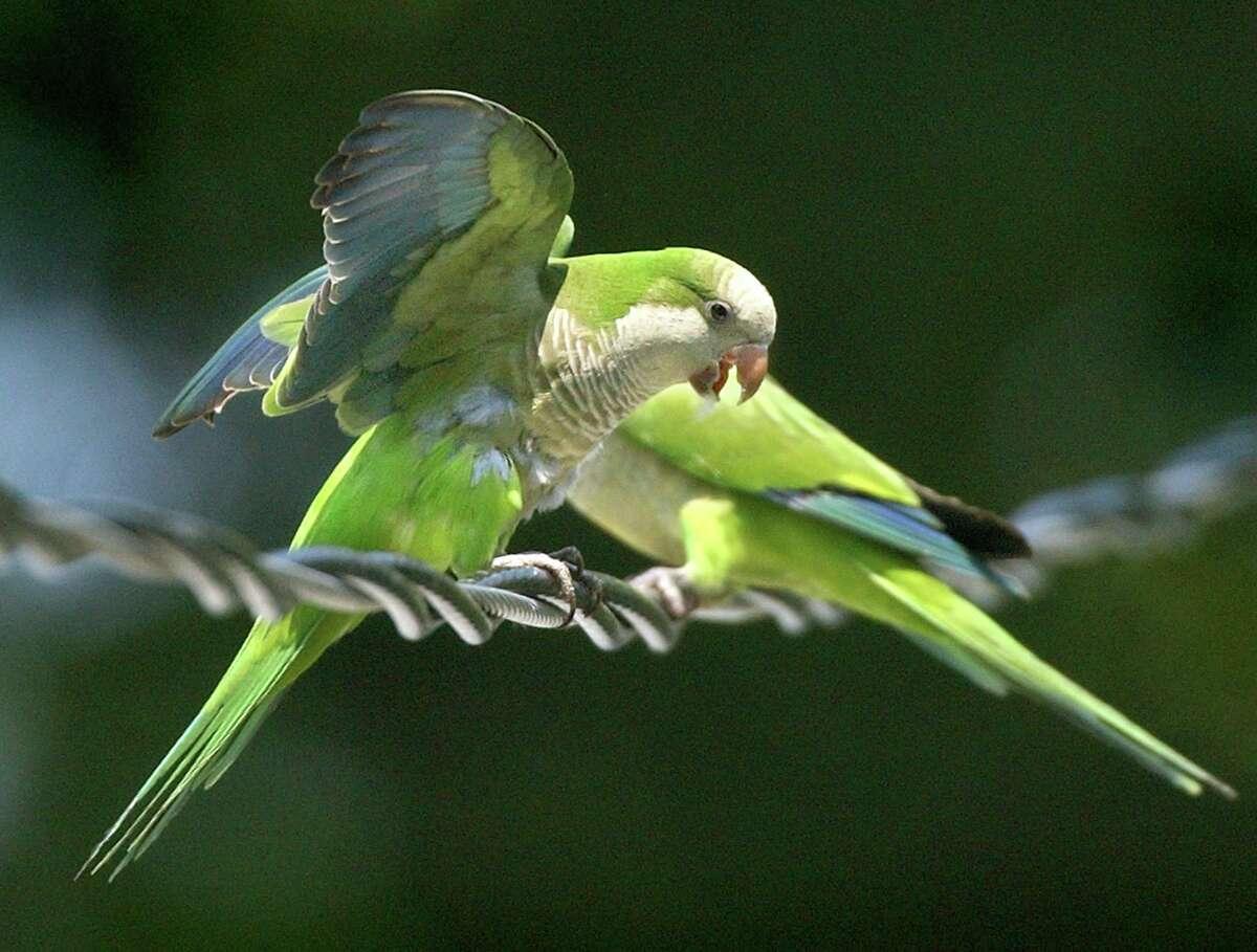 Around Deer Park Enormous Nest On Water Tower Belongs To Monk Parakeets