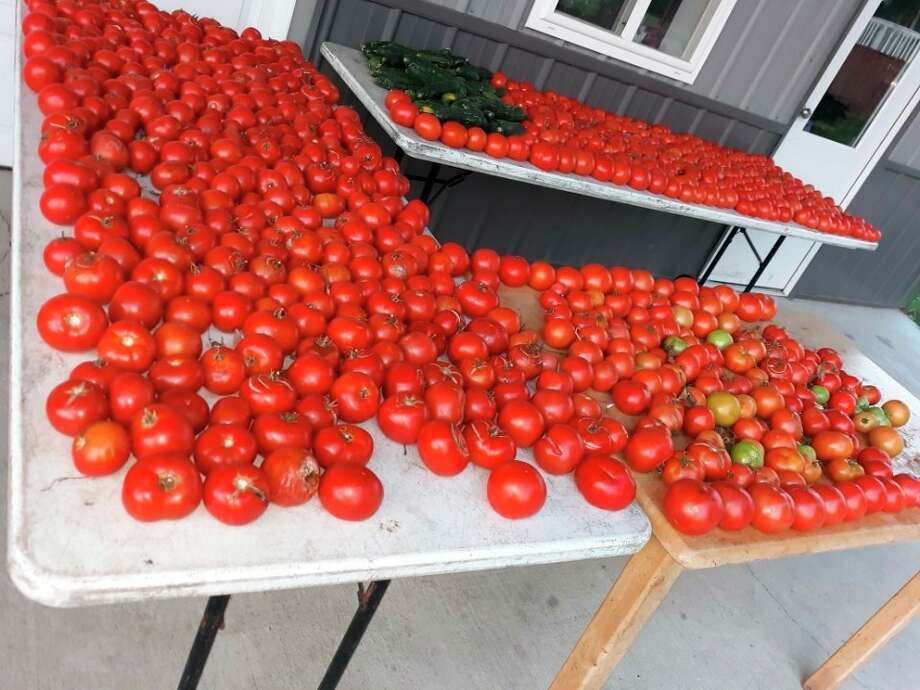 Tomatoes from the Eicher family garden. (Courtesy photo)