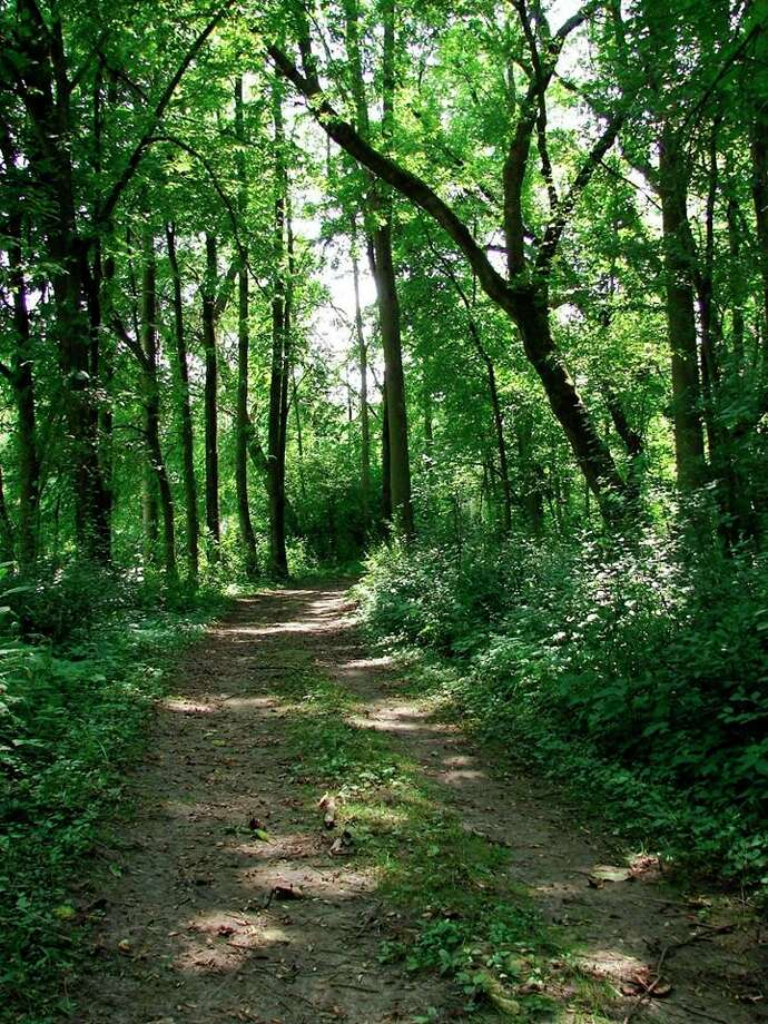 Wednesday, July 8: Chippewa Nature Center is the Wednesday location for the 6 to 7 p.m. Walk Midland, a City of Midland Parks and Recreation program in partnership with MidMichigan Health, Chippewa Nature Center and Greater Midland Corporate Wellness.(Photo provided/Chippewa Nature Center)
