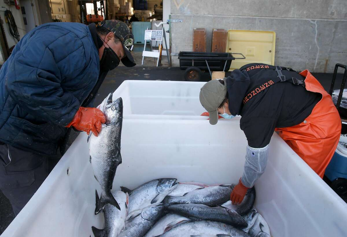 Boras Barrios sorts salmon unloaded from the fishing boat Chief Joseph as Noelle Takamori looks for farm-raised fish at Pier 45 San Francisco, Calif. on Wednesday, July 1, 2020.