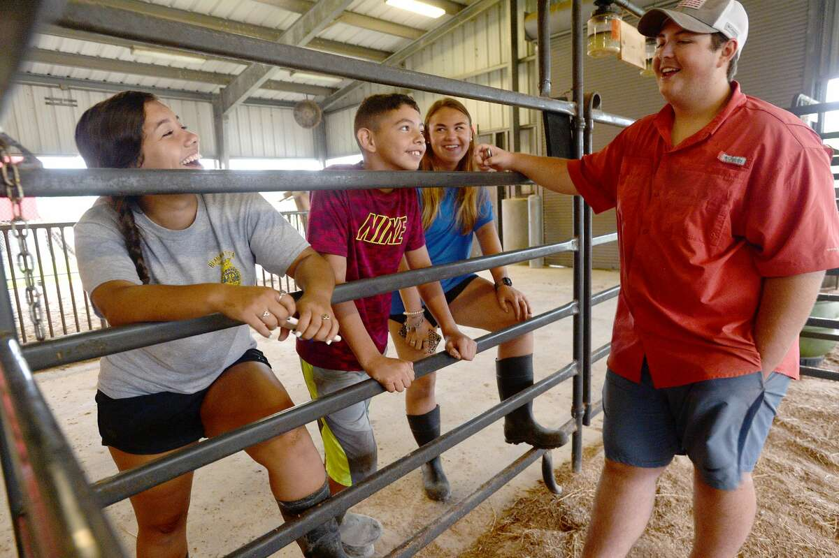 From left, Kelly and Javi Velazquez, Annabelle Benton and Dylan Diaz joke with one another after finishing their chores at the BISD Agriculture Department's barn Monday. While certain aspects of the curriculum could move online, as had all coursework in the wake of COVID-19 school closure, the ag program was unique. Students in the FFA have animals, whose care cannot be done virtually. Feeding, cleaning, mucking stalls and cages and walking the animals are daily chores, and department head Stephanie Hoppe had to devise a plan to allow students to tend to their animals while adhering to safety guidelines. And the number of animals needing care was greater than normal, as the closure of the South Texas State Fair and Houston Rodeo meant animals that normally would have been shown and later auctioned, were now back at the barn. Hoppe and students hustled to find buyers, only to be met with a wait list for packing houses. The cost of feeding those animals in the meanwhile fell to students, some of whom broke just above even by the time their animals left the barn. Photo taken Monday, June 22, 2020 Kim Brent/The Enterprise