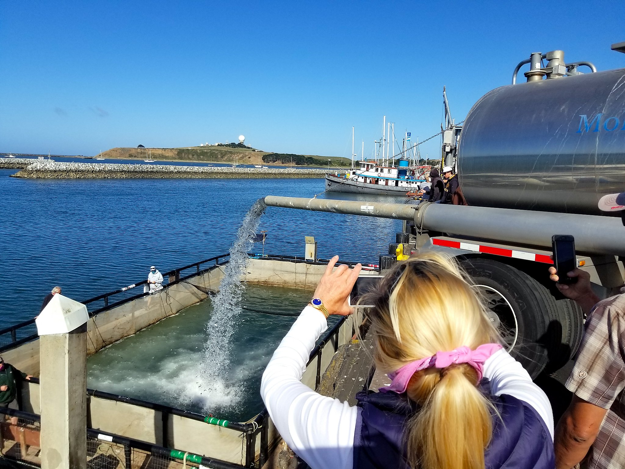 720,000 baby salmon released in Half Moon Bay harbor