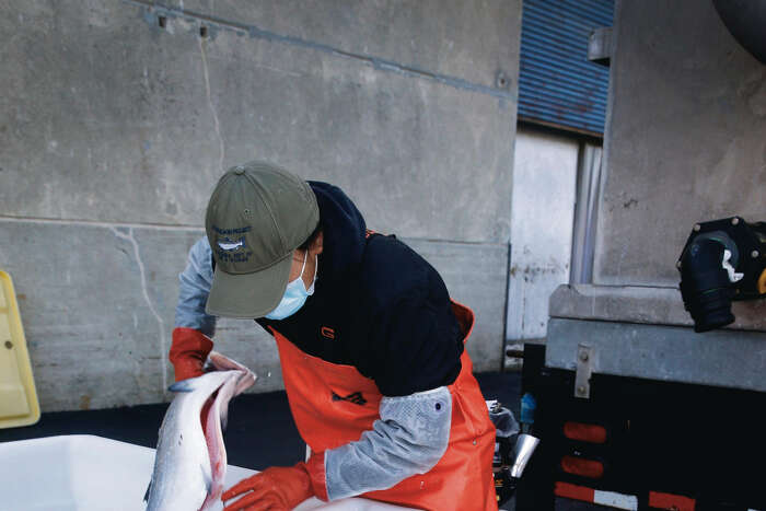 Noelle Takamori inspects farm-raised salmon caught in the Pacific as the catch is unloaded from the fishing boat Chief Joseph at Pier 45 San Francisco, Calif. on Wednesday, July 1, 2020.