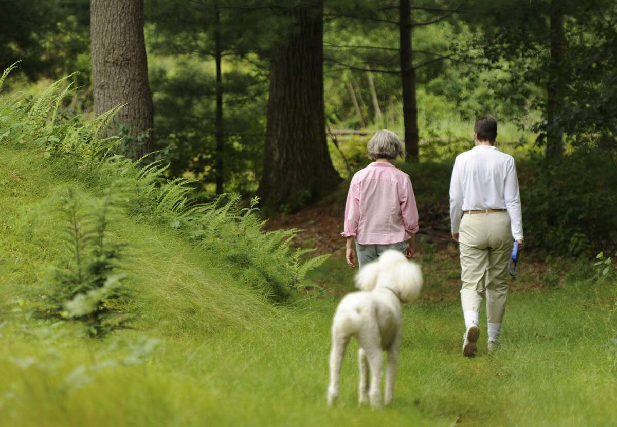 WESTON, MA - JULY 12: Friends Emily Hutcheson, left, and Laurie Bent, right, take a stroll in the woods near Hutcheson's Weston home on July 12, 2013 along with Bent's dog Maisie, a Standard Poodle. Bent who dresses to prevent tick bites is extra cautious since her son had Lyme Disease 25 years ago. (Photo by Essdras M Suarez/The Boston Globe via Getty Images)