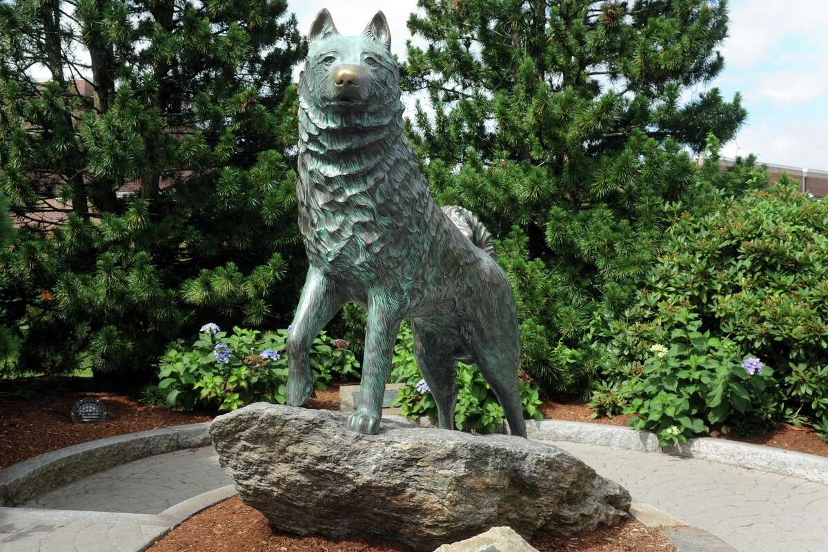 A statue of Jonathan the Husky, UConn's mascot, stands outside of Gampel Pavilion on the University of Connecticut campus, in Storrs, Conn. Aug. 20, 2018.