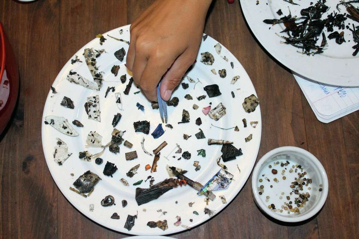This is a small example of the plastic pollution, which degrades into small pieces, and are ingested by marine organisms.