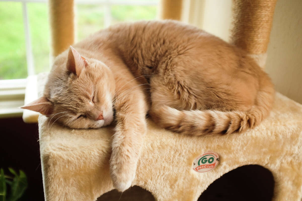 Nap time on the cat tree.