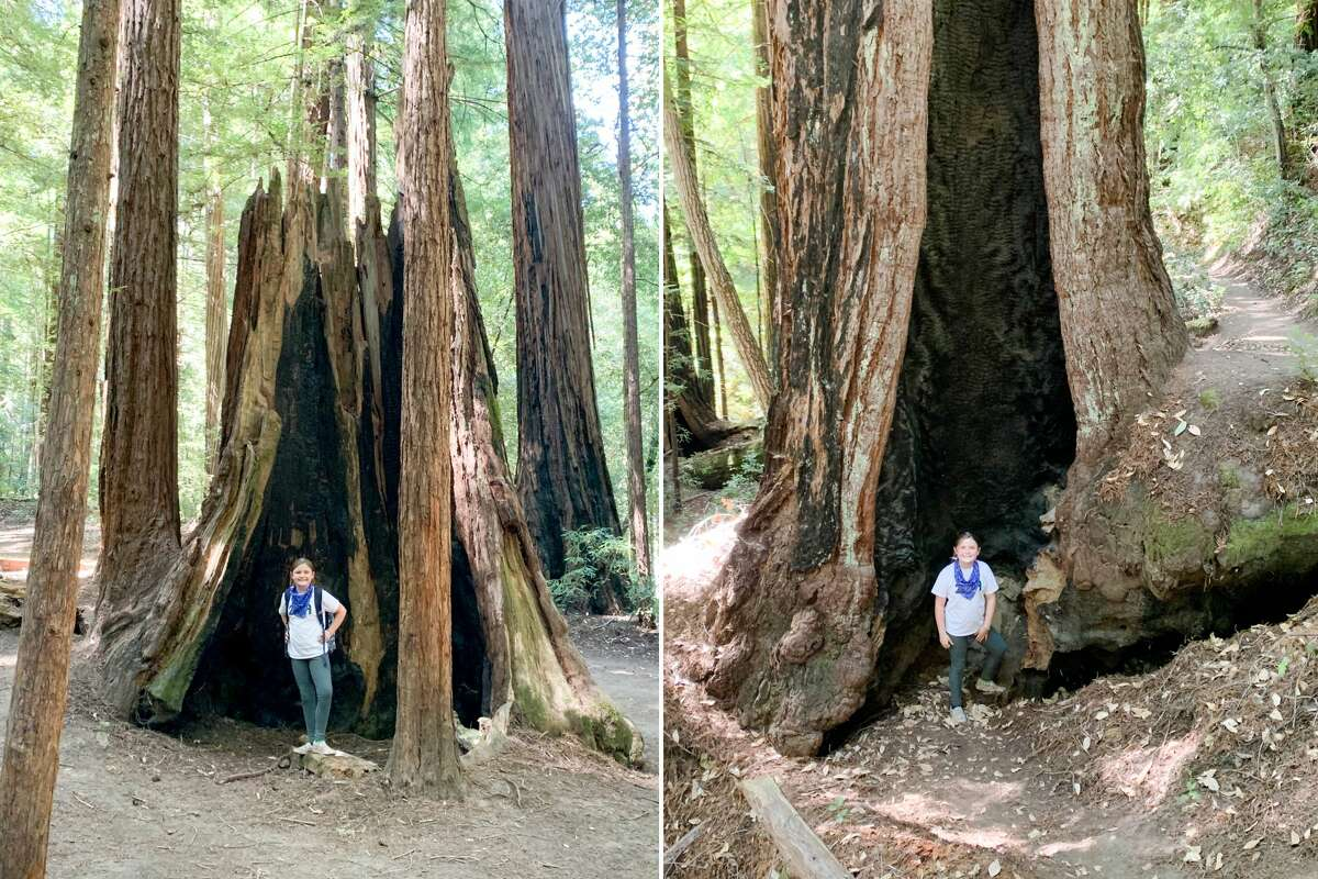 Really though, you could build a tiny house in some of the redwoods at Big Basin Redwoods State Park.