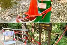 Camping at Big Basin Redwood Park.
