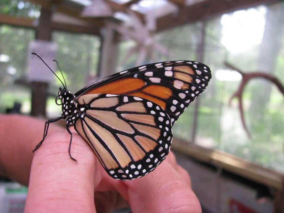 A butterfly lands on someone's hand at the Jasper Arboretum. Photo: Courtesy Of Jasper Arboretum/Texas A& AgriLife Extension