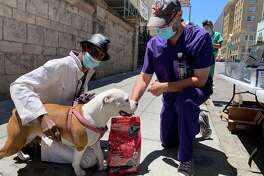 The Pets In Need Project visits the Tenderloin to serve homeless pets.