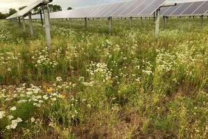 A pollinator-friendly solar field like this one is being proposed for Torrington's landfill property by US Solar.