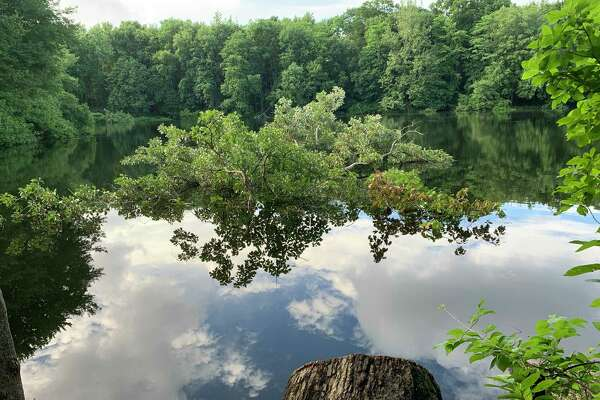 The Fairfield Conservation Department recently cut down a tree at Perry's Mill Pond, shown here with its foliage submerged in the water and its stump in the foreground. Some residents said it was the site of fun for generations.