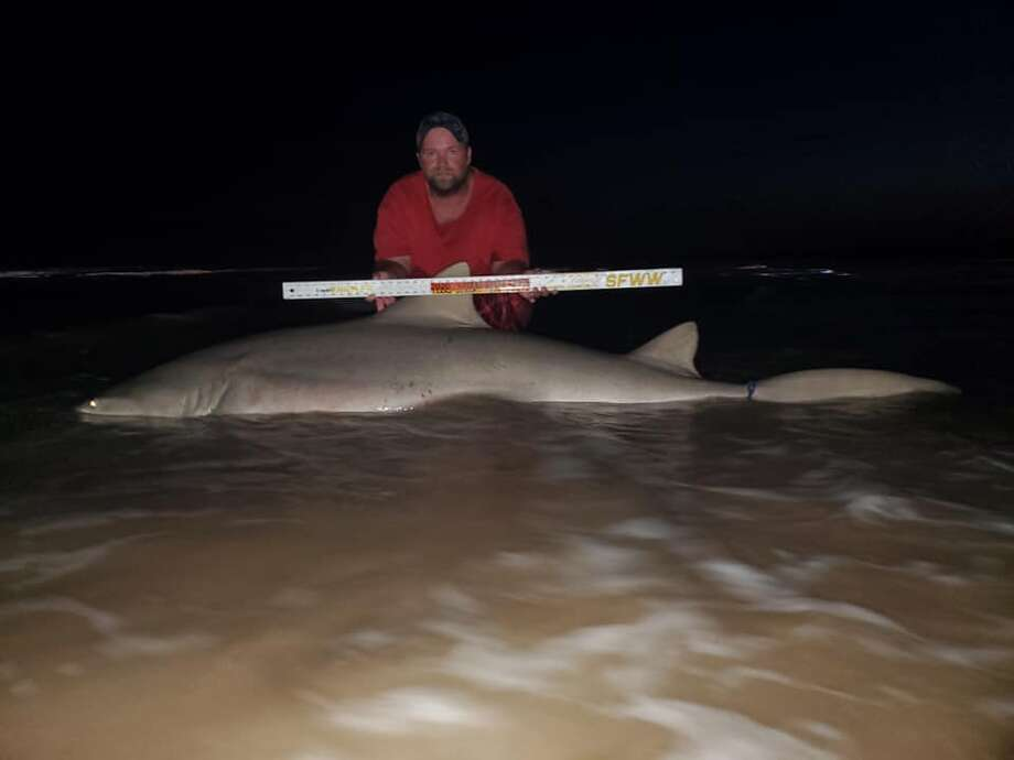 On Monday, Donnie Tidwell from Brazoria, who has been fishing for sharks for more than 10 years, reeled in a 9-foot, 300-pound shark from the shoreline at Matagorda Beach. Tidwell said it was the biggest catch he's ever had from a beach shoreline. Photo: Donnie Tidwell