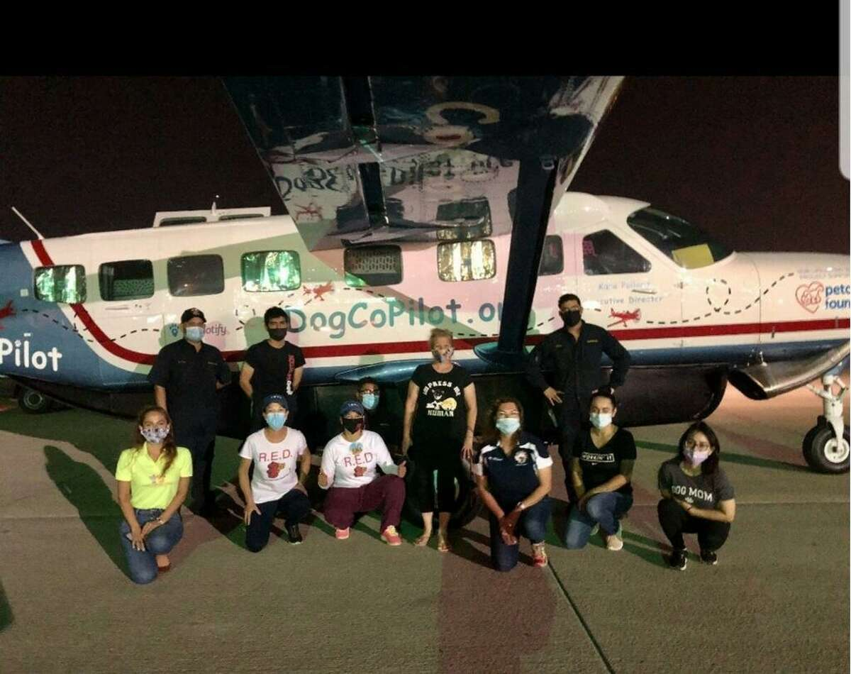 A total of 104 animals were rescued from the City of Laredo Animal Care Services early Thursday morning and were flown to their new homes in Colorado, Utah and Wyoming thanks to help from the Dog is My Copilot and American Pets Alive programs.