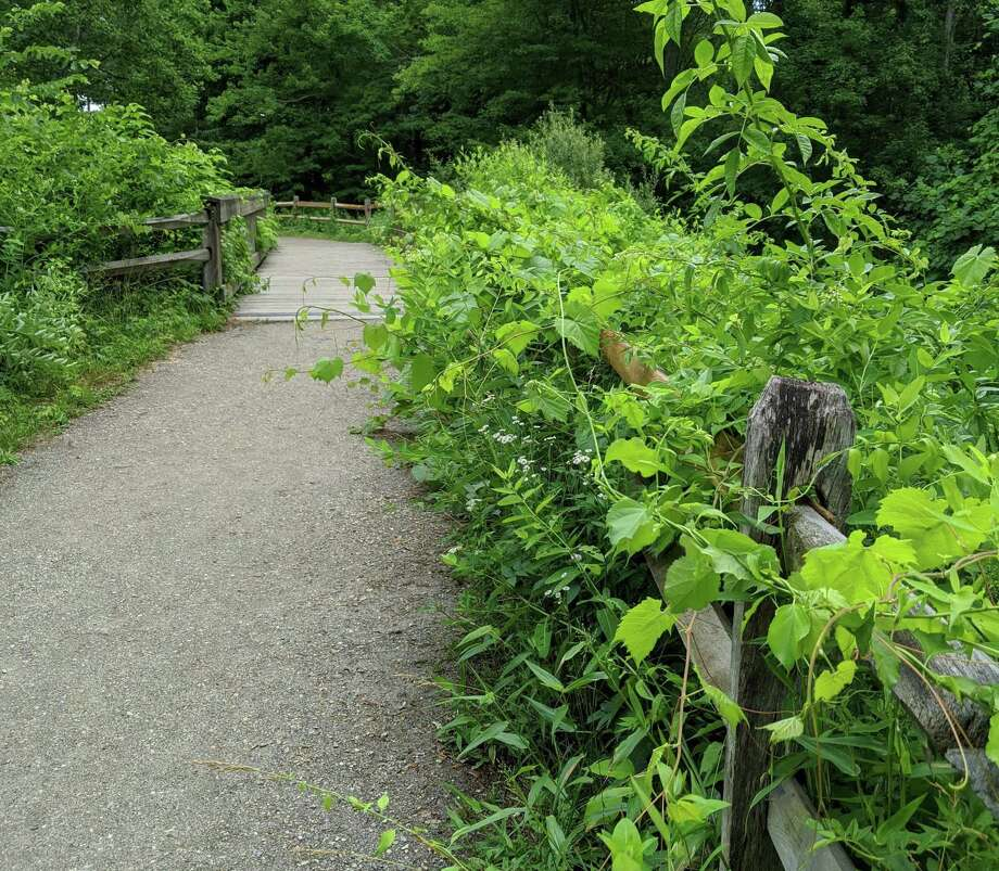 The Shelton Trails Committee is holding a work party on the Rec Path at Silent Waters on Saturday, July 11. Photo: Contributed Photo / Connecticut Post