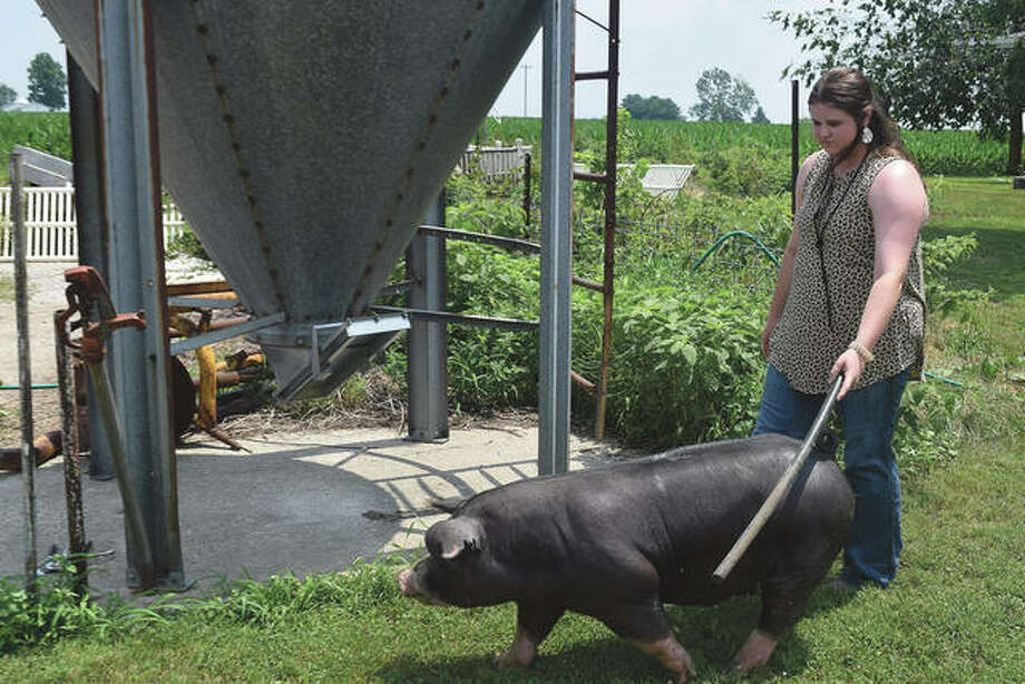 Anne Becker leads one of her pigs across the farm after a bath. Photo: Samantha McDaniel-Ogletree | Journal-Courier