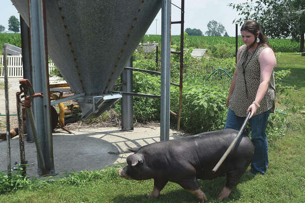 Anne Becker leads one of her pigs across the farm after a bath.