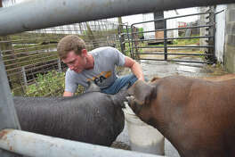 Luke Bergschneider cleans pigs at his house in Franklin.
