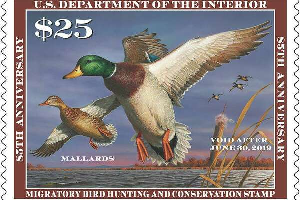 """Waterfowlers purchase the great majority of federal duck stamps which fund refuge purchases and other conservation programs, but a proposal to require a """"hunting element"""" in the annual stamps image has even some hunters questioning the idea."""