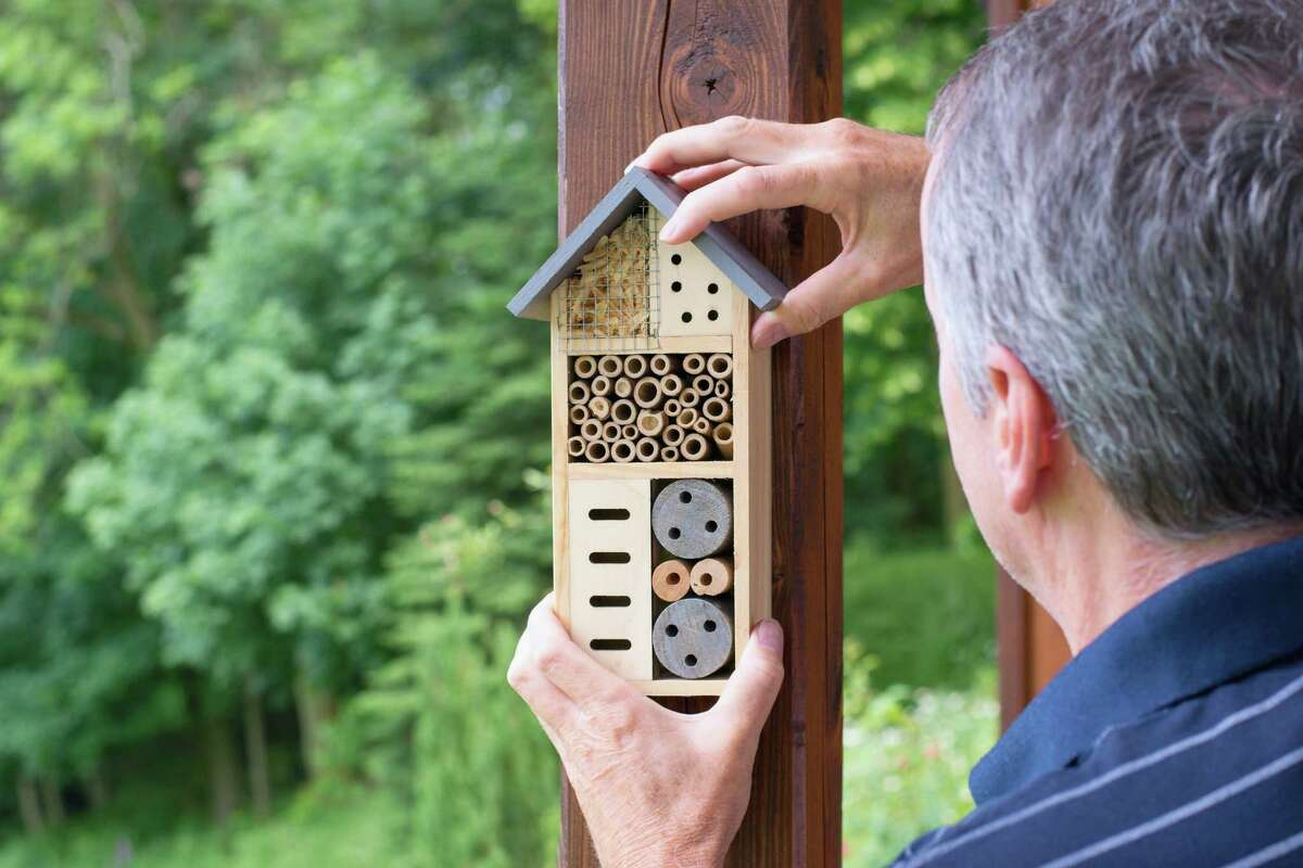 Man installing insect hotel. Environmental conservation - insect house.