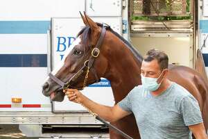 Tiz the Law is lead from a horse van by stable foreman Juan Barajas from Belmont Park as he returns to Saratoga Race Course July 13, 2020 in Saratoga Springs, N.Y. to prepare for his next race, The Travers Stakes on August 8th.   Photo by Skip Dickstein