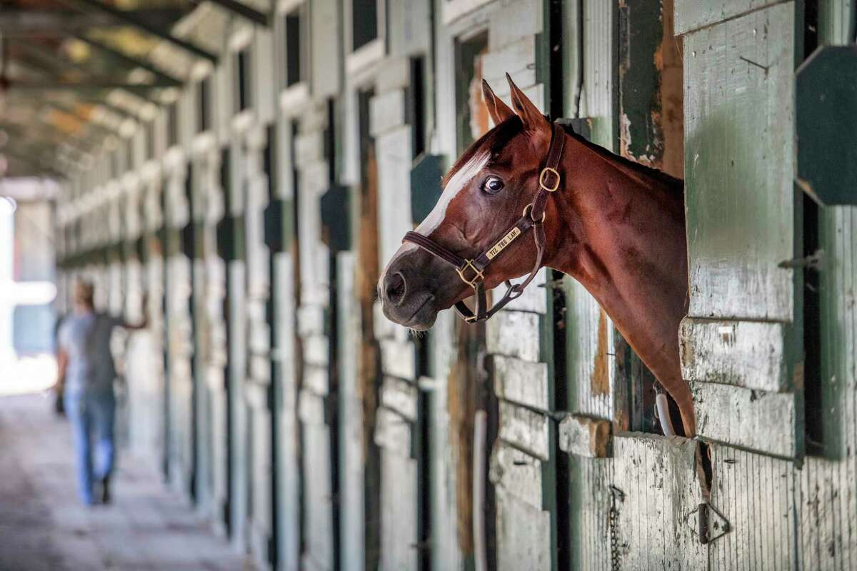 Tiz the Law looks out of its stable atSaratoga Race Course July 13, 2020 in Saratoga Springs, N.Y.