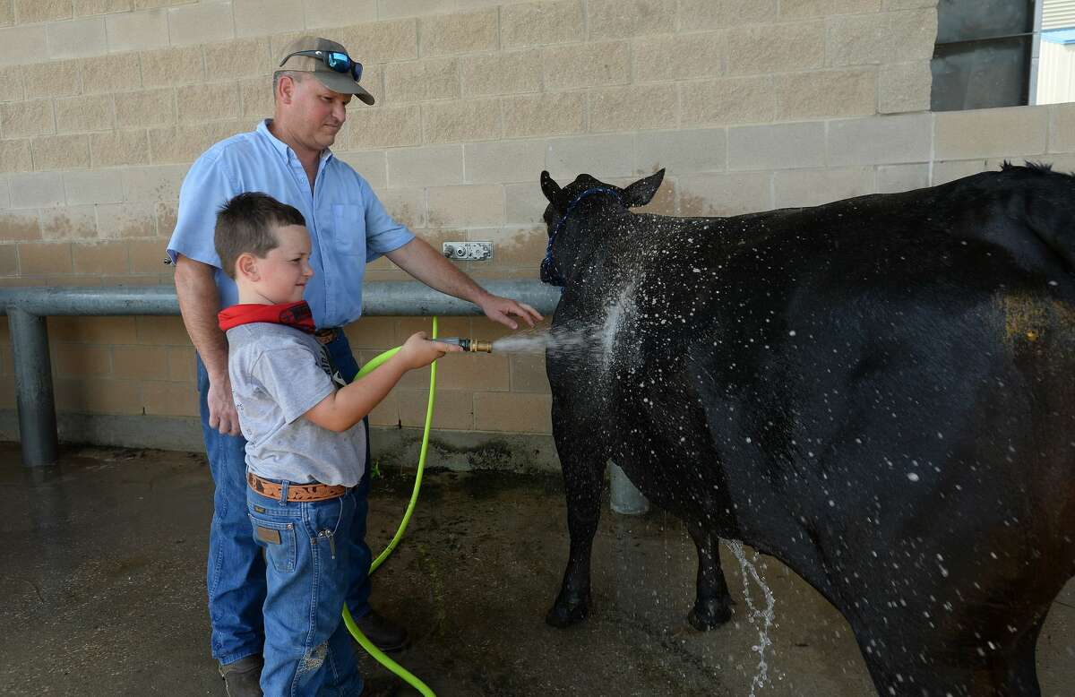 Darren Baxley helps as his son Harold, 8, washes his heifer