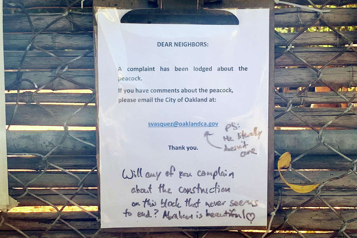 A message board of peacock commentary decorates the fence facing the peacock's habitat in one neighbor's spacious backyard.