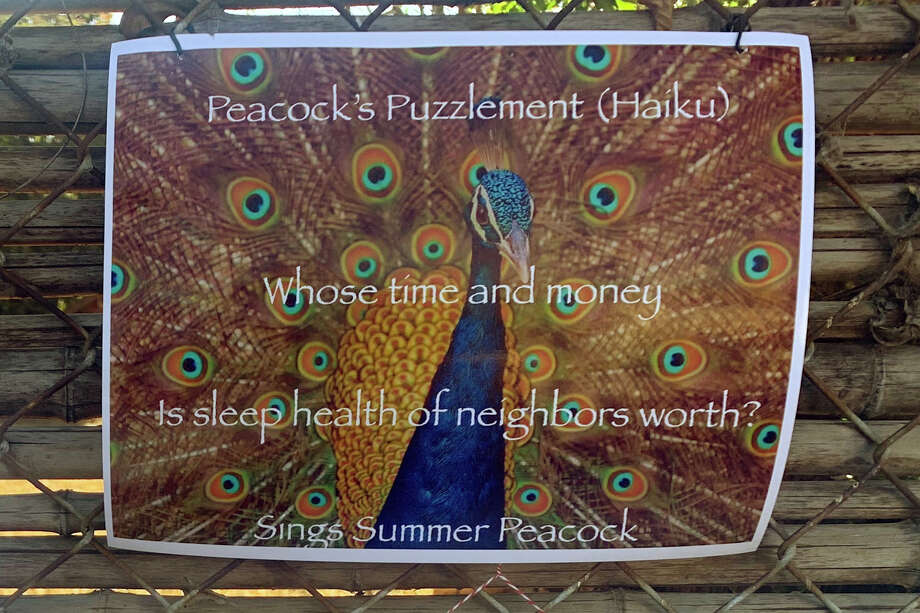 Some neighbors have left peacock-themed poetry and artwork on the fence overlooking the bird's habitat. Photo: Madeline Wells/SFGATE