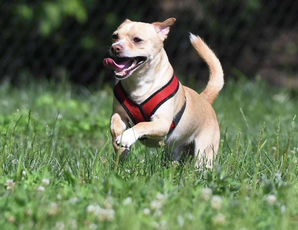 """""""Off-leash dog parks."""""""