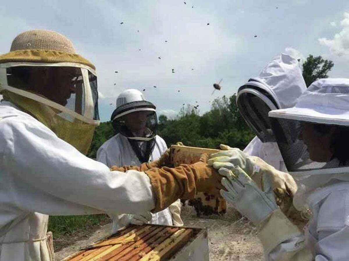 Dr. Jason Williams, an SIUE faculty advisor, helps members of the Honey Bee Association perform a hive inspection at the apiary on the university's campus.