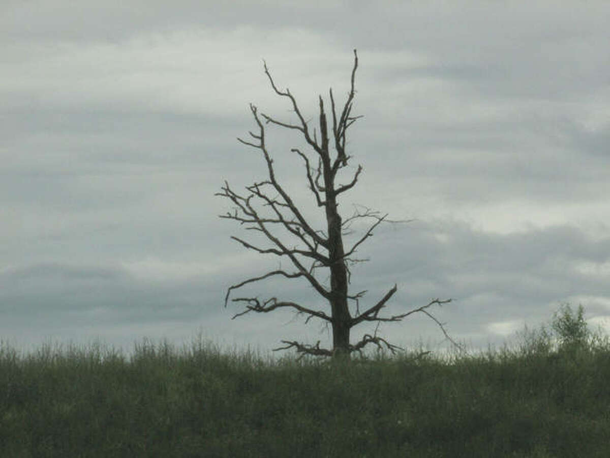 A solitary tree stretches to reach the horizon of a cloudy sky.