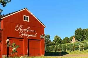 The rural setting of Rosabianca Vineyards in Northford.